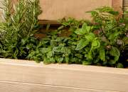 Huerta de especias en cajón de madera
